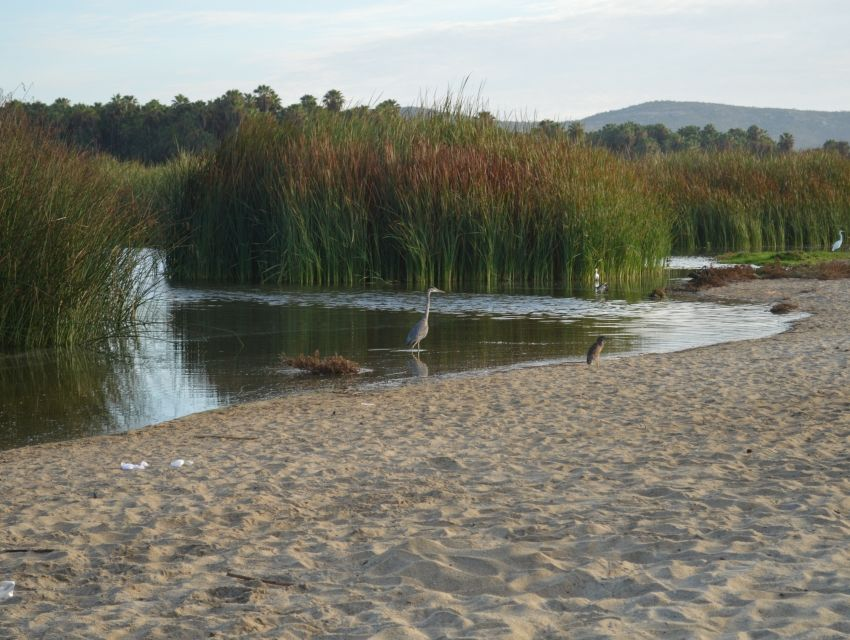 San Jose's Estuary and Bird Sanctuary