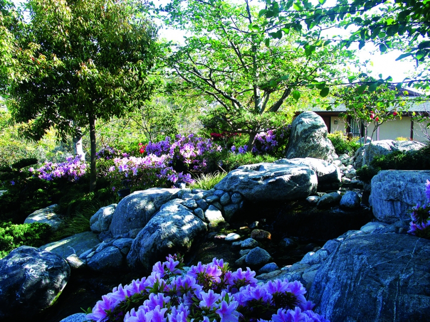 Japanese Friendship Garden San Diego Tourist Attractions Sightseeing Eventseeker