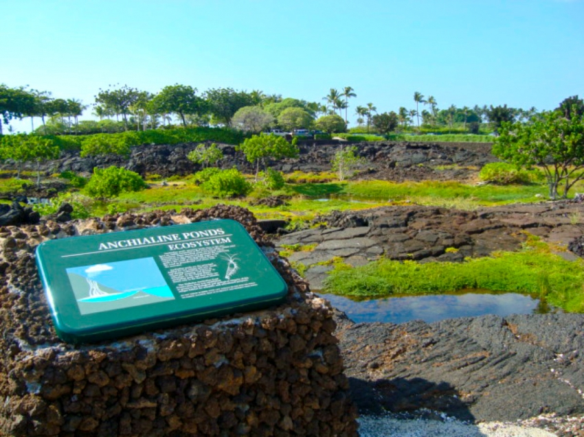 Waikoloa Anchialine Pond Preservation Area